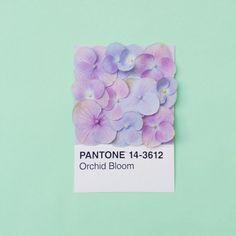 Pantone goes sweet - Aesthetic Inspiration Photo Instagram, Instagram Posts, Pantone Swatches, Yennefer Of Vengerberg, Website Design, Illustration, Grafik Design, Color Pallets, Color Theory