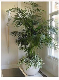 4 Simple and Modern Tricks Can Change Your Life: Artificial Flowers Table large artificial plants topiaries.How To Arrange Artificial Flowers artificial plants houseplant. Artificial Plants And Trees, Artificial Flowers, Fake Indoor Trees, House Plants Decor, Plant Decor, Fake Plants Decor, Decoration Plante, Diy Plant Stand, Plant Stands