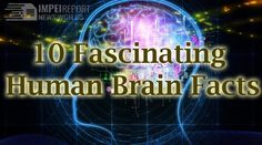 Top 10 Interesting Facts About The Human Brain Impelreport. Get 2018 exclusive news entertainment, movies, music Hollywood updates at one place. Amazing Funny Facts, 10 Interesting Facts, Brain Facts, Fun Facts, Hollywood, Neon Signs, Entertaining, Thoughts, Music
