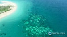 04/20/2016 - Aerial Survey of Great Barrier Reef Bleaching