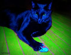 My Mouse, My Rules #cats #blackcats #photography by Clarissa Johal