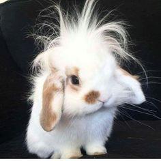 This bunny has bed head teehee