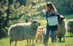 Farm stays: Lessons in the reality of rural life - rural tourism is certainly something worth looking into