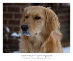 jeremy richter | photography :: blog: Darby Surveying with a Snow-Powdered Nose