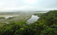 [Parque Nacional Laguna del Tigre #Guatemala ] Stephanie Wells: la expiloto de la NASA que monitorea la Biosfera Maya