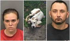 Maximum Penalty For Thonotosassa Couple For Starving Their Dogs And Abusing Them! | PetitionHub.org