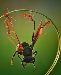 Amazing Ants Hold Bug   OMG Amazing Pictures - Most Amazing Pictures on The Internet