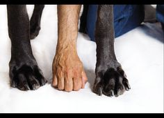 Giant George: The Biggest Dog In The World