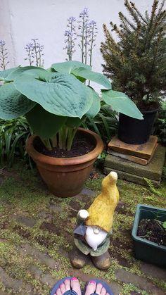 smartcontent @KatjaStaring Twitter, Plants, Seeds, Plant, Planting, Planets