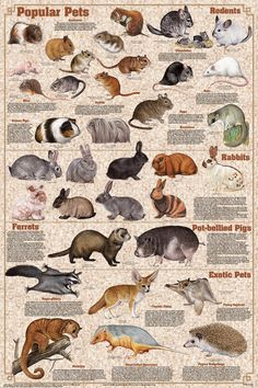 This poster has all sorts of popular and not so popular pets. Including hamsters, gerbils, mice, rats, chinchillas, guinea pigs, rabbits, ferrets and quite a few exotic pets. Perfect for a pet store or a pet lover! Only $11.99