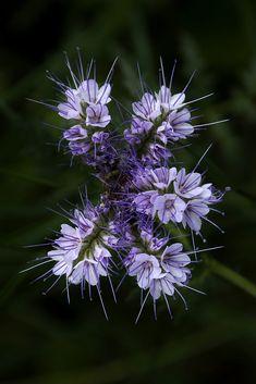 Blüten by Tommy Kah / 500px People Like, Beautiful Flowers, Dandelion, Fine Art, Engagement, Creative, Garden, Pretty, Garten