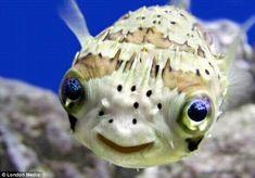 Smiling fish ..