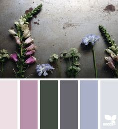 Find great premade color pallets for your brand, blog or portfolio here. Which pallet did you choose?