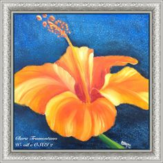 Ibiscus arancio