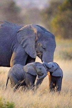 Cute Baby Turtles, Cute Baby Cow, Very Cute Baby, Cute Baby Bunnies, Cute Babies, Mom And Baby Elephant, Elephant Love, Elephant Art, Elephant Photography