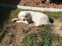 Fonzi soaking up the sun after digging another hole