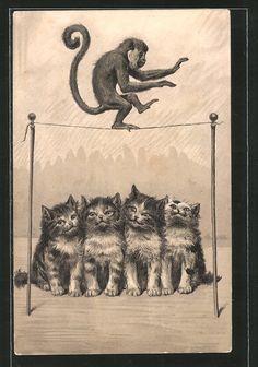 old postcard: Präge-Lithographie vermenschlichter Affen balanciert vor Katzen auf einem Seil