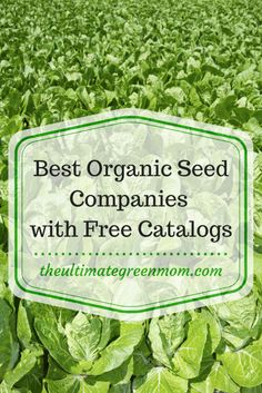 The best organic seed companies with free catalogs The Ultimate Green Mom Organic Gardening Catalogue, Organic Gardening Tips, Organic Farming, Vegetable Gardening, Sustainable Gardening, Gardening Blogs, Gardening Quotes, Urban Gardening, Gardening Supplies