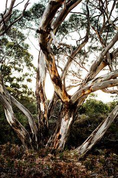 Australian Photography, Ocean Photography, Beach Trip, Hawaii Beach, Oahu Hawaii, Kara Rosenlund, Picnic At Hanging Rock, Kangaroo Island, Vintage Hawaii