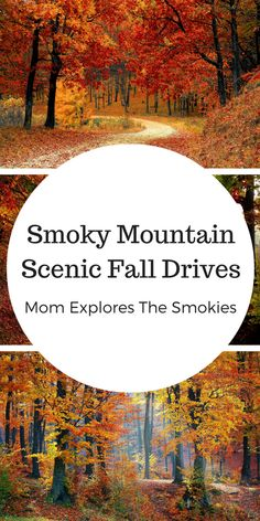 Whether on vacation, holiday or living local, these scenic fall drives through the Smokies are sure to be a hit on your next family trip to the Smoky Mountains in Tennessee!