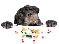 Saiba porque o uso de antinflamatórios de humanos para os pets pode levá-los à morte