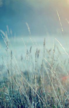 blue grass . . .