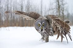 Do You Know These 10 Essential Owl Facts?
