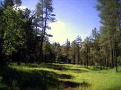 Wildcat Spring Trail Payson AZ 3 mile