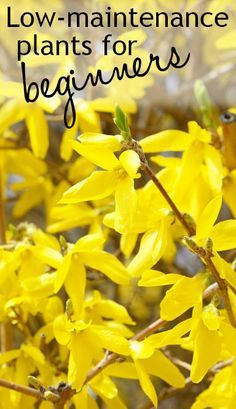 1000 ideas about low maintenance shrubs on pinterest shrubs evergreen shrubs and drought - Plants that dont need soil natures wonders ...