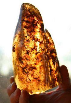 Large Amber Specimen