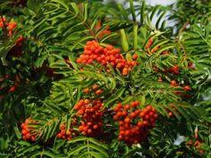 Plants, November, Food, November Born, Essen, Meals, Plant, Yemek, Eten