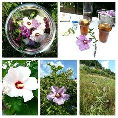HIBISCUS MUNT-IJSTHEE Ingrediënten: -15 gram hibiscusbloemen -15 gram munt - evt. 1 kaneelstokje -1 liter kokend water  - zoetstof naar smaak - partjes bevroren limoen. Bereiding: Doe de blaadjes van de hibiscus en de munt in een pan en giet kokend water erover. Dek af en een nacht laten trekken. Zeef de drank, voeg de zoetstof toe en serveer in een glas met bevroren partjes limoen. In de koelkast een week houdbaar. Edible Flowers, Stuffed Mushrooms, Herbs, Table Decorations, Nature, Recipes, Recipe, Stuff Mushrooms, Naturaleza