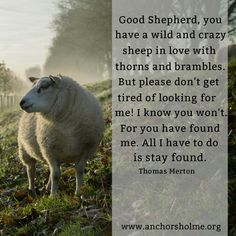 """Good Shepherd, you have a wild and crazy sheep in love with thorns and brambles. But please don't get tired of looking for me! I know you won't. For you have found me. All I have to do is stay found."" From 'Entering the Silence' by Thomas Merton  Luke 15:1-7 The Lost Sheep - Is it a cuddly, innocent lamb or a tatty old sheep? David Adam, in 'Living in Two Kingdoms' recalls an artist who illustrated this parable with Jesus depicted as being weighed down by a tatty, molten-coated sheep…"