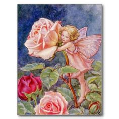THE ROSE FAIRY POST CARDS