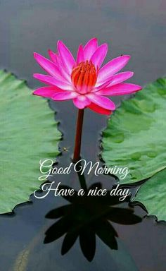 Those we love to wish good morning. If you too truly love someone, and are searching for good morning to love to wish them good morning every morning. Good Morning Images Flowers, Good Morning Beautiful Images, Good Morning Nature, Good Night Love Images, Good Morning Photos, Good Morning Love, Morning Pictures, Good Morning Wishes, Happy Morning Quotes