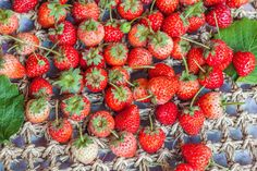Realistic Graphic DOWNLOAD (.ai, .psd) :: http://jquery-css.de/pinterest-itmid-1006887982i.html ... Fresh red ripe strawberries ...  berry, closeup, delicious, dessert, food, fresh, freshness, fruit, green, healthy, leaf, natural, organic, red, ripe, strawberry, summer, sweet, tasty, tiny, vitamin, white  ... Realistic Photo Graphic Print Obejct Business Web Elements Illustration Design Templates ... DOWNLOAD :: http://jquery-css.de/pinterest-itmid-1006887982i.html