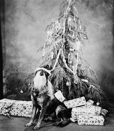 Rin Tin Tin, circa 1920s.