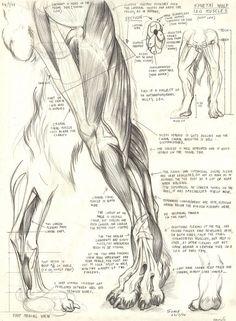 Dog Anatomy, Animal Anatomy, Muscle Anatomy, Anatomy Sketches, Anatomy Drawing, Anatomy Art, Mythological Creatures, Fantasy Creatures, Mythical Creatures