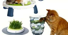 """(POSTED 7/19/14)  Win a Catit Senses Cat Play Set from """"Woman's World Magazine"""" You can enter every day until August 2nd, 2014. http://winit.womansworldmag.com/sweepstakes/win-a-catit-senses-cat-play-set-4055"""