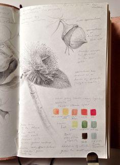 Eucalyptus sketchbook study detail dianne sutherland в 2019 Nature Sketch, Nature Drawing, Arte Sketchbook, Sketchbook Pages, Garden Journal, Nature Journal, Artist Journal, Art Journal Pages, Botanical Drawings
