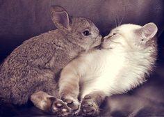 You smell adorable.