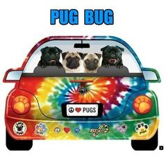 Limited supply and will look great on your way to Pug Fest. Amor Pug, Pug Accessories, Pug Rescue, Pug Christmas, Pug Mug, Pug Pictures, Animal Pictures, Black Pug, Pug Puppies