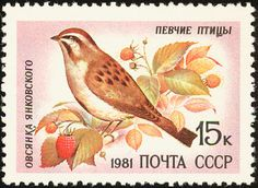 Jankowski's Bunting stamps - mainly images - gallery format
