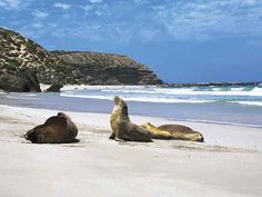 All inclusive day tours to discover Kangaroo Island's most famous landmarks. Depart from Adelaide or on Kangaroo Island. List Of Days, Kangaroo Island, Island Tour, Famous Landmarks, South Australia, Day Tours, Beautiful Islands, Backpacking, Wildlife