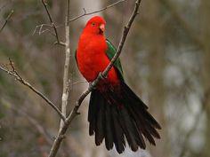 Parrot - lovely image