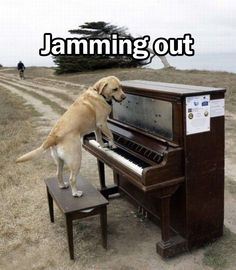 Jamming out #dogs #Lab #Labrador