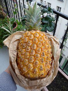 Ananas Victoria  http://www.pariscotejardin.fr/2013/01/ananas-victoria/