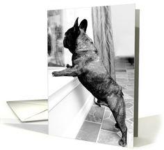 French Bulldog Dog Sympathy Greeting card by FBRN