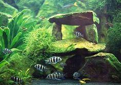Cool tank setup with java moss for your betta. (Add salt at a rate of: Aquascaping, Aquarium Aquascape, Planted Aquarium, Aquarium Terrarium, Small Terrarium, Aquarium Landscape, Aquarium Fish Tank, Fish Tanks, Cichlid Aquarium