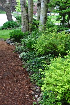 Mulch used as a pathway along the side of a house. Softer underfoot - alwalys with shoes- and nice woodland effect